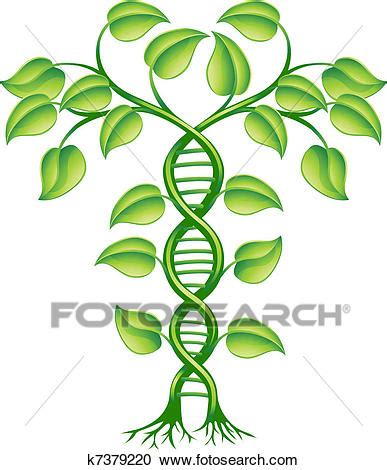 Research work on medicinal plants for sale